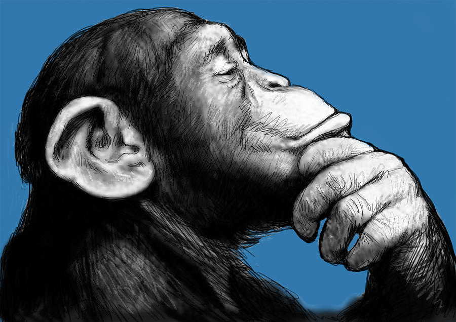 Do monkeys have the cure for cancer?